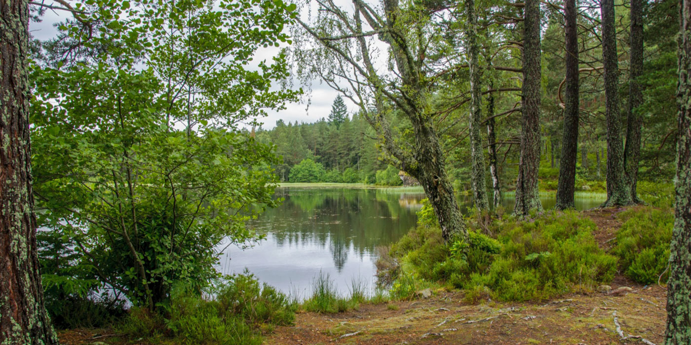 Glentanar_Estate_lodge_slideshow_22