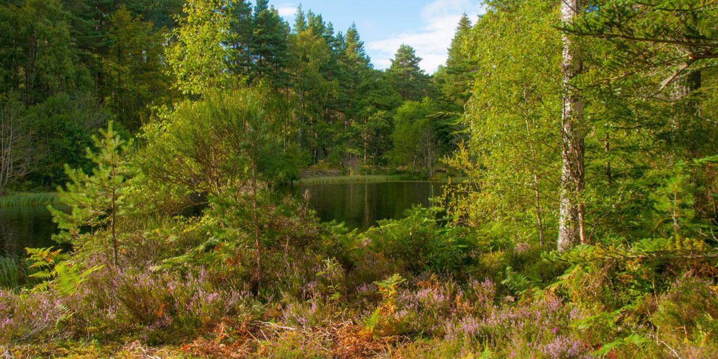 Glentanar_Estate_lodge_slideshow_35